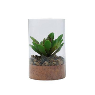 Vaso-Vidro-Life-Terrarium-Transparente-Com-Planta-78X78X12cm